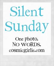 Silent Sunday: 23/11/2013 (2/2)