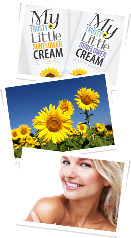Sunflower Cream
