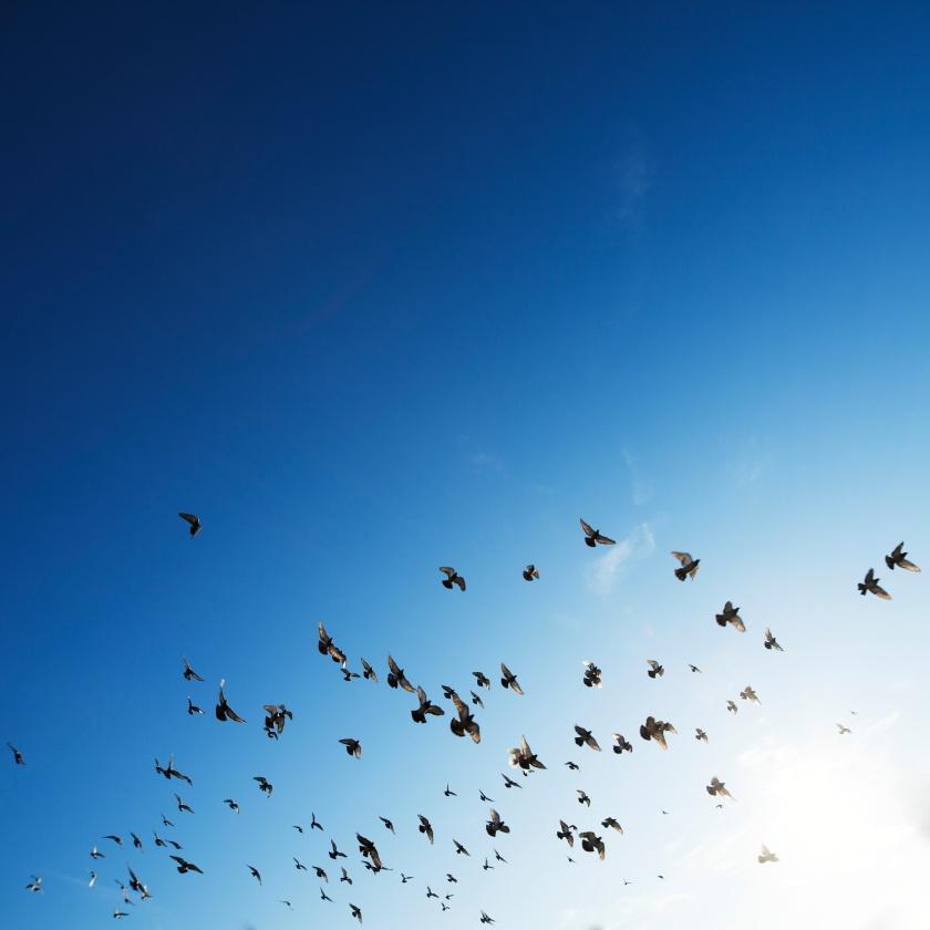 Seagulls Unsplash